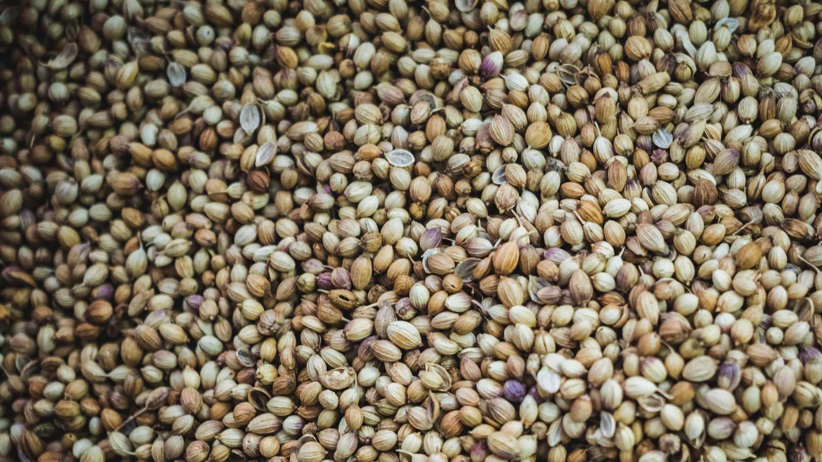 זרעי המפ | קנאביס רפואי בריא בישראל
