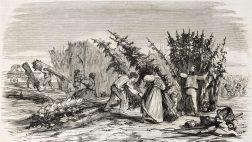 היסטוריית הקנאביס בישראל