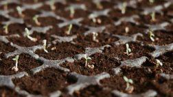 זרעי קנאביס - בריא בישראל