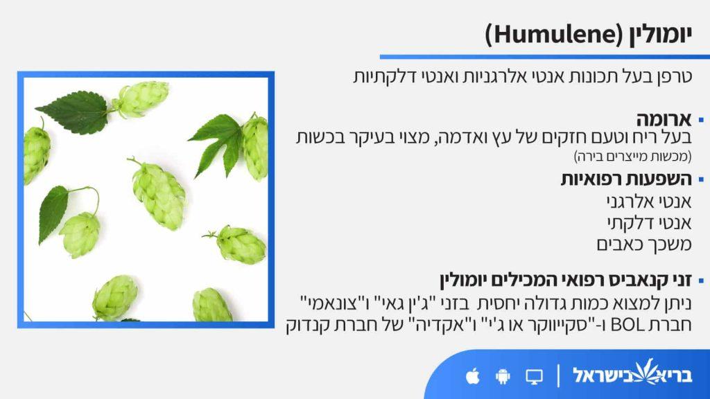 טרפן יומולין (Humulene) כל מה שחשוב לדעת - בריא בישראל