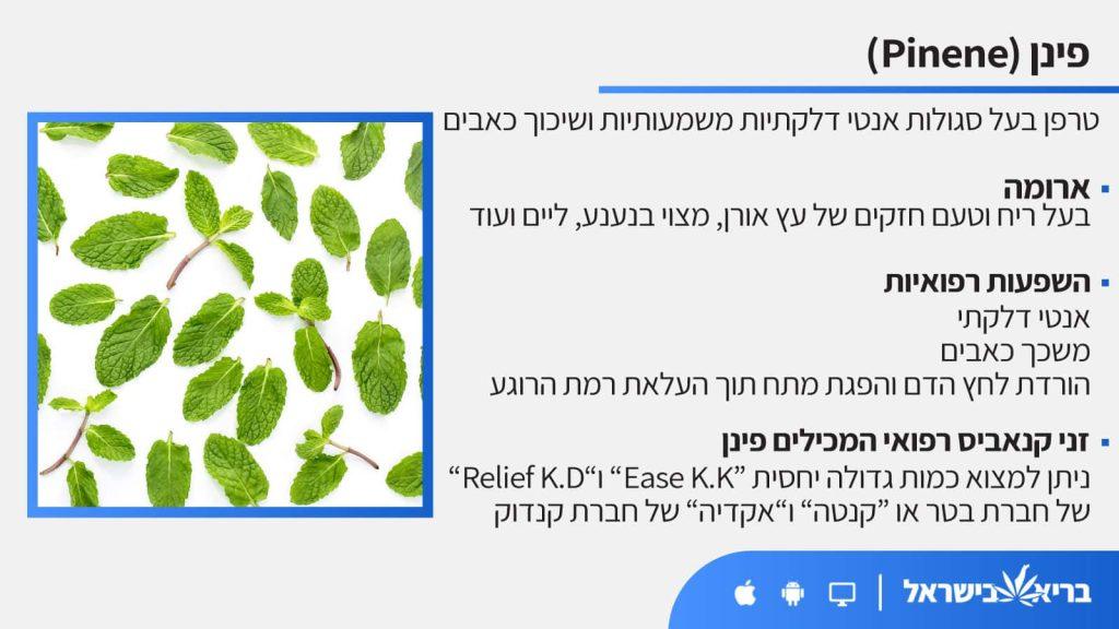 טרפן פינן (Pinene) כל מה שחשוב לדעת - בריא בישראל