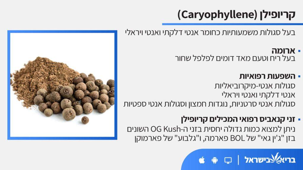 טרפן קריופילן (Caryophyllene) כל מה שחשוב לדעת - בריא בישראל